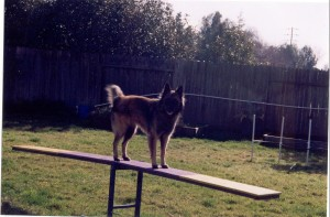 BJ playing on teeter at home