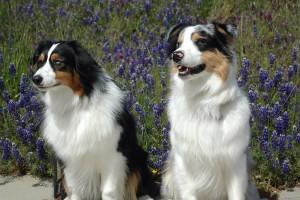 IMG_0015_Haley & Riley