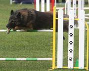 IMG_4821 Paige skims the jump